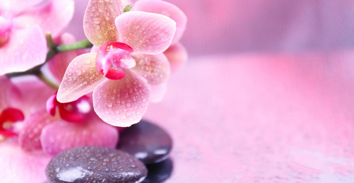 orchid_spa_flowers_pink_stones_zen_nature_hd-wallpaper-1785583